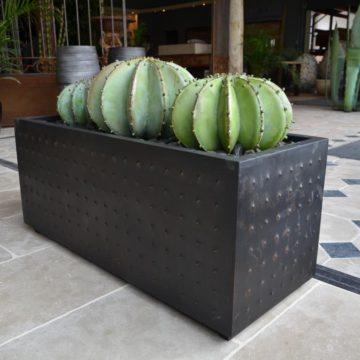 Jardinière avec cactus en métal