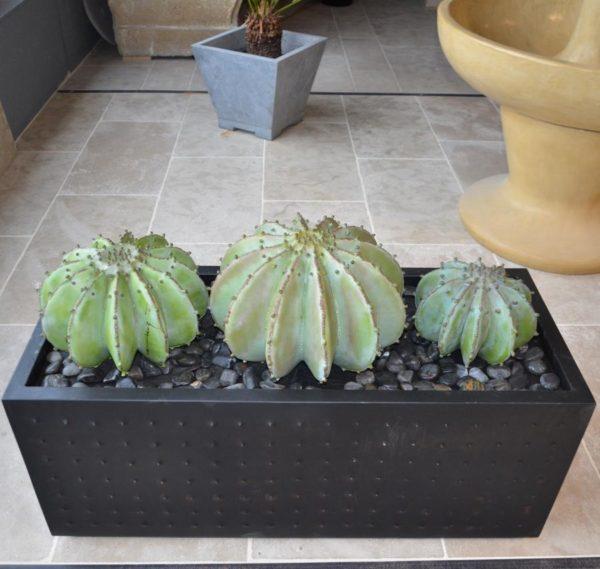 Jardinière en métal avec cactus en métal