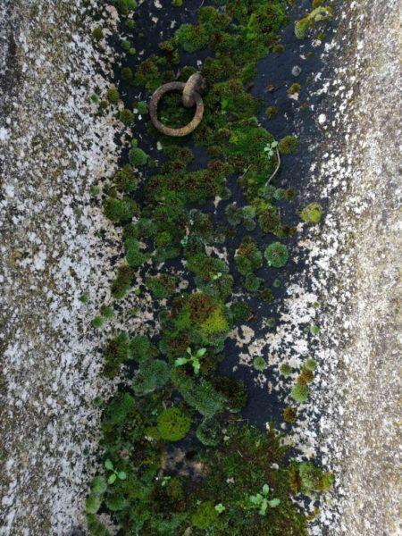 auge rectangulaire en pierre calcaire avec mousse